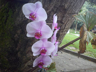 Orquidea by Brunoo