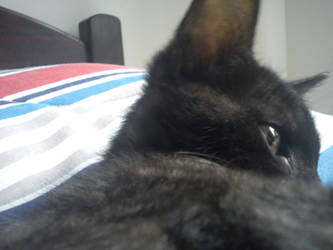 Gato Preto by Brunoo