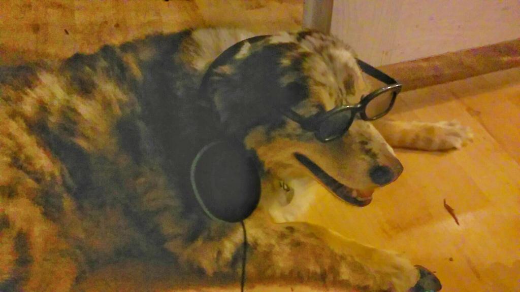 gamer dog 2 by oojw801 on deviantart