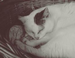 sleeping kitty II