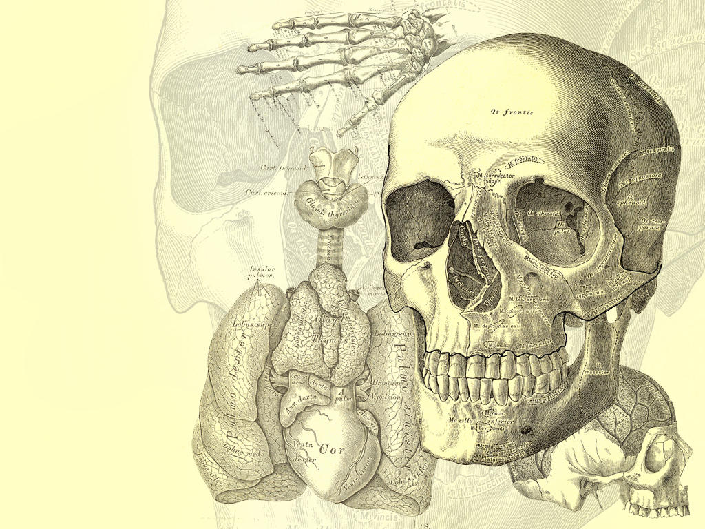 Human Anatomy By Cepumswp On Deviantart
