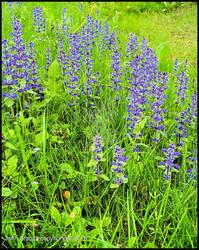 Back Yard  Flowers