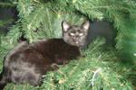 kitty7 by deadfearie-stock