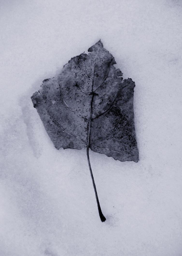 winter leave by Langfard