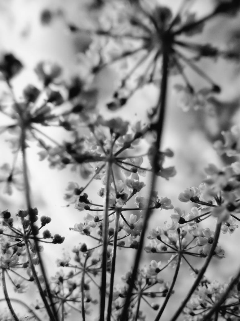 Black White Flowers 3 By Langfard On Deviantart