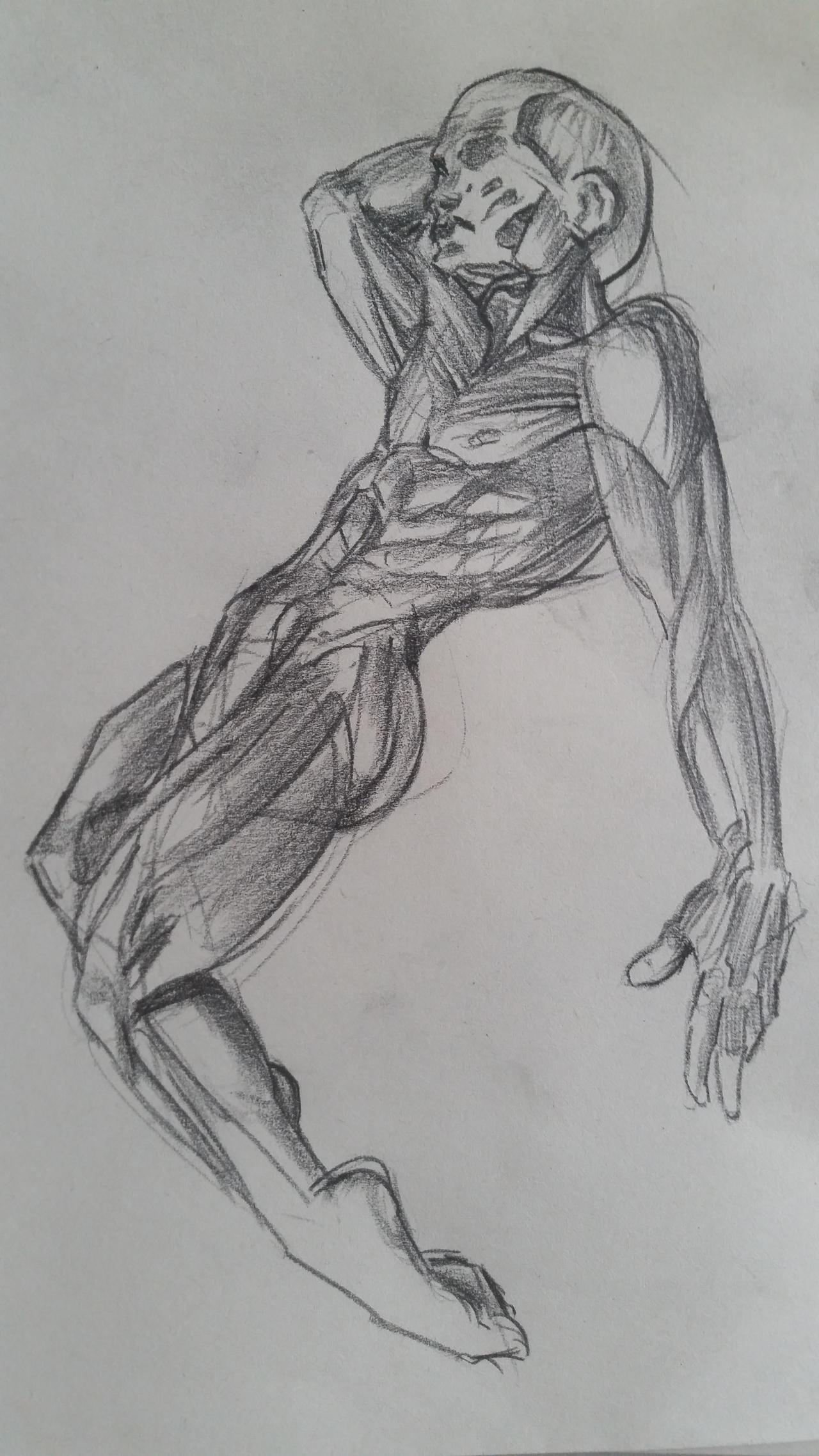 Anatomy practice 1