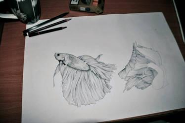 Siamese Fish *In Progress* by olenka168