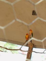 Encounter Of The Birds by blondofu