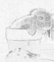 Little Rabbit by blondofu