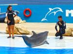 Dolphin show_1