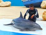Dolphin show_2