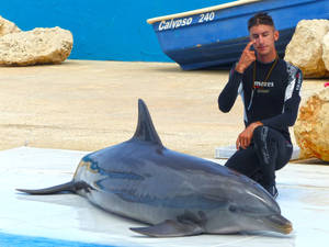 Dolphin show_3