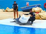 Dolphin show_4