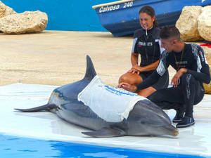 Dolphin show_5