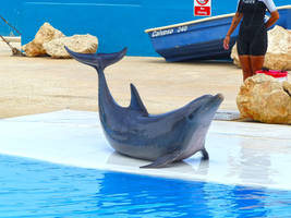 Dolphin show_6