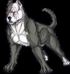 Fredward the pitbull