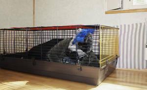 Pitbull in Captivity by casualGEE