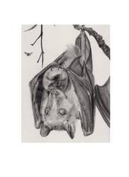 fruit bat by dotyp