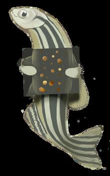 The mycobiota of the zebrafish