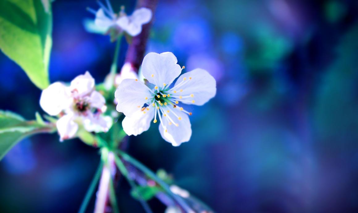 Secrets Of A Summer Night by FlowerRoad