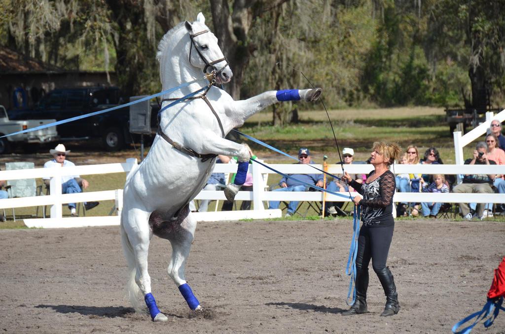 Lipizzaner Stallions 20 by Lauren-Lee