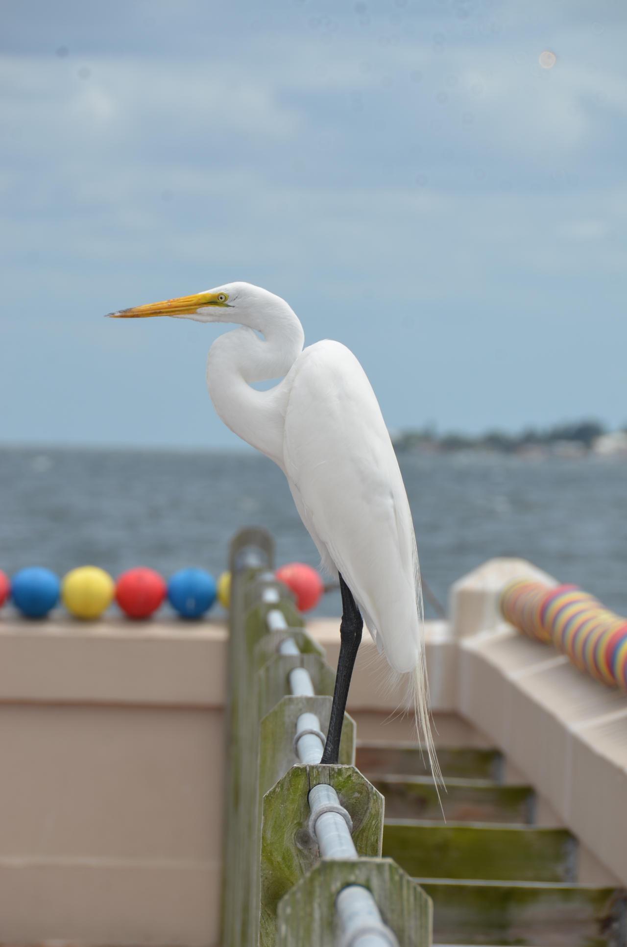 Egret Close St Marys Island Chatham Me Eg