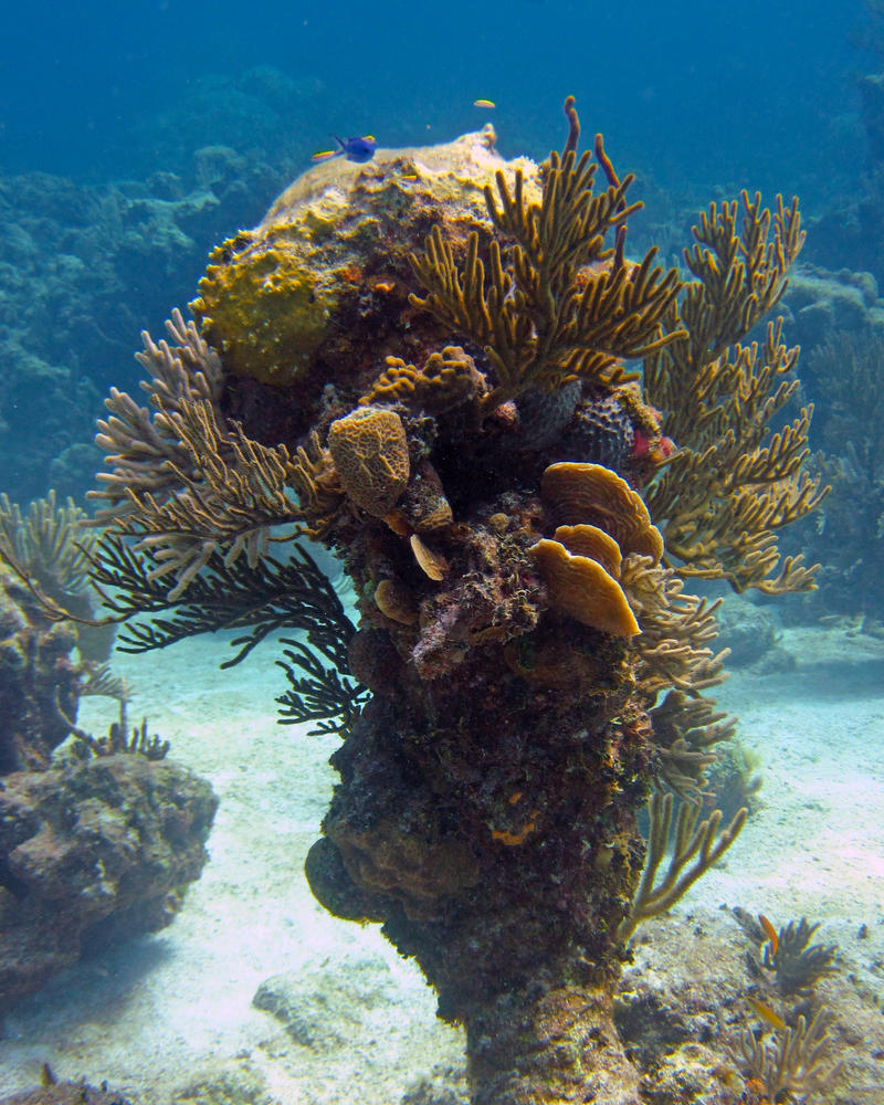 Coral Outcropping - Goulding Cay by Lauren-Lee