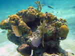 Coral Head - Goulding Cay