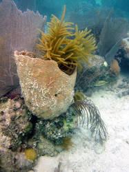 Bell Sponge, Sea Gardens, Islamorada, FL