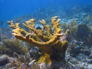 Coral, Sea Gardens, Islamorada, FL