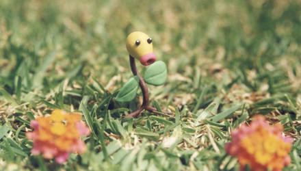 Bellsprout 'my first pokemon'