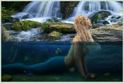 A MERMAID WATCHES