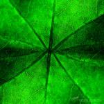 Green Veins by DREAMCA7CHER