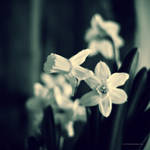 Can You Feel Spring ? by DREAMCA7CHER