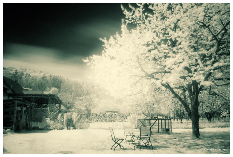 The Infrared Garden by DREAMCA7CHER