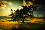The Big Pine