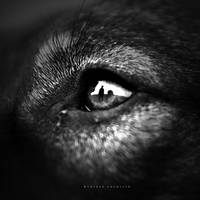 I See You by DREAMCA7CHER