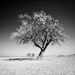 The Infrared Tree by DREAMCA7CHER