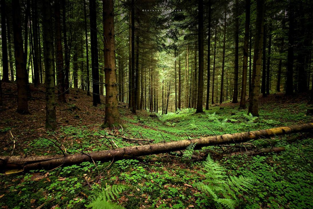 Грибной лес