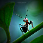 The Wood Ant