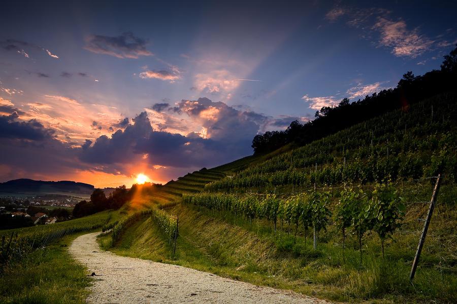 Summer Wine by DREAMCA7CHER