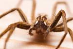 Spider Eyes by DREAMCA7CHER