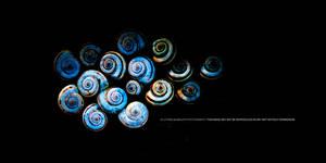 16 Snails