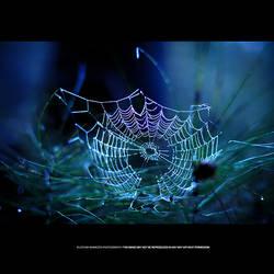 Spider Art by DREAMCA7CHER