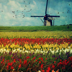 Netherlands by disposable-heroX