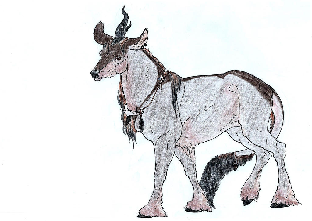 Ratibor | Doe | Blackwood NPC | Herbalist/Witch by blaine-rr