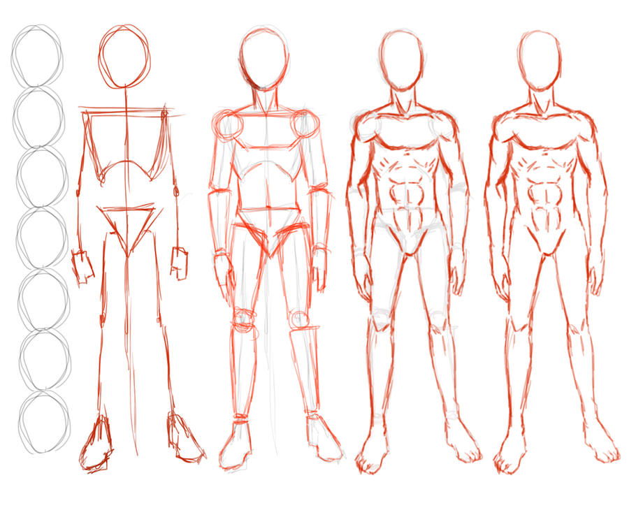 Line Drawing Female Body : Construction of male figure by seandee on deviantart