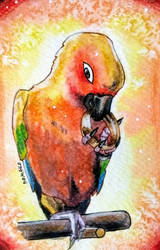 Pippin the parrot - request