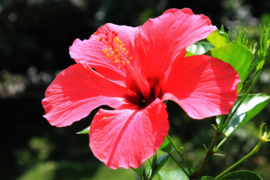 Big Island Flower Delivery