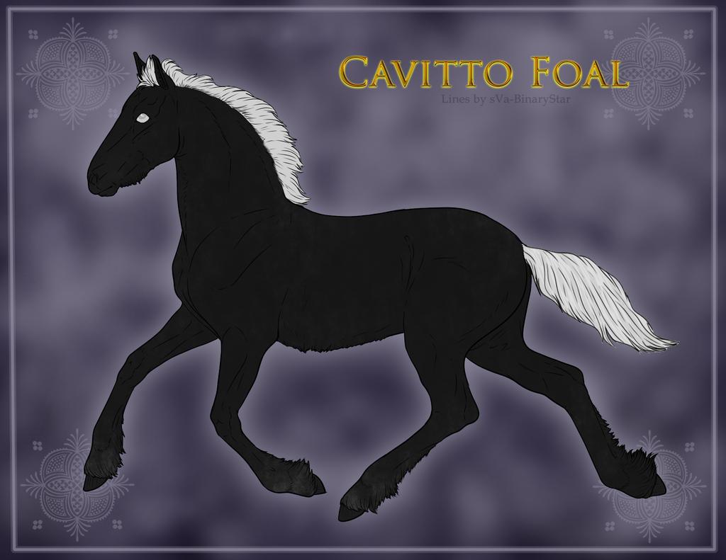 Cavitto Foal 1148